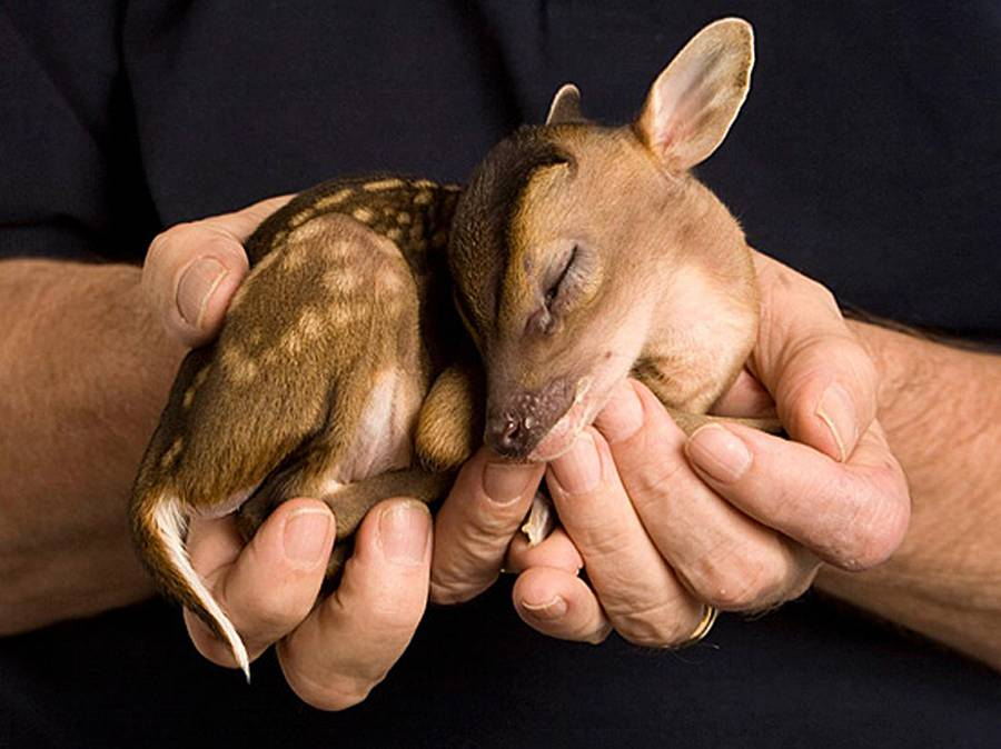 Cutest animal in the world