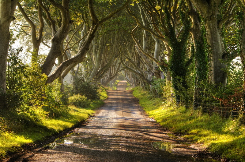 Аллея буков (The Dark Hedges) в Ирландии.